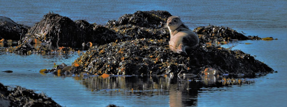 Chapel bay Seals.jpg